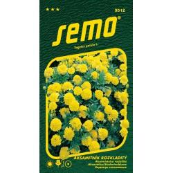 Aksamitník rozkladitý Lemon Drop