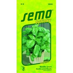 Bazalka pravá Lettuce Leaf